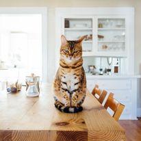 Mieszkanie dla kota i psa