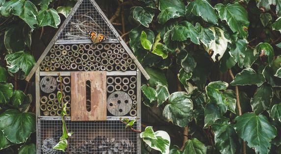 Domki dla owadów - jak zrobić?