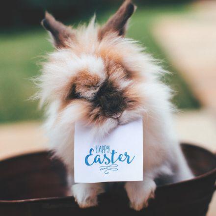 Jak przygotować dom na Wielkanoc?